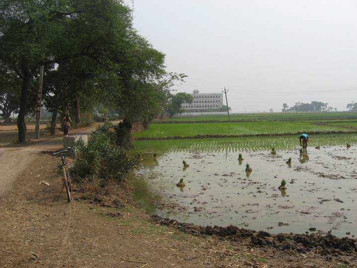 Ekachakra_fields_05.JPG
