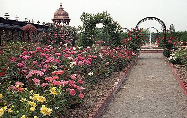 Krishna's Rose Garden