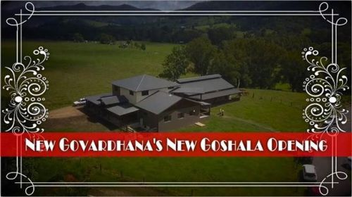 New Govardhana's New Goshala (5 min. video)
